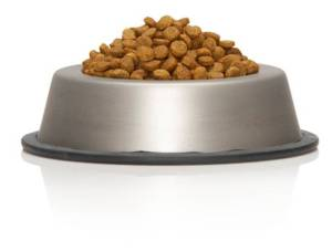 dog food in a dish