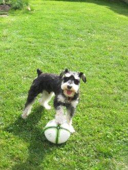 Soccer/Football Caesar